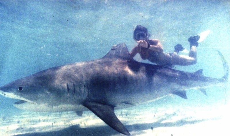 Shark Attack Cozumel Scubaboard