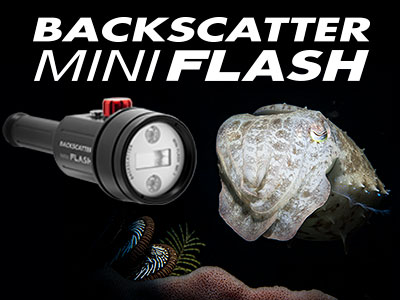 Backscatter_Mini_Flash_MF-1_Jim_Decker_Banner-SB.jpg