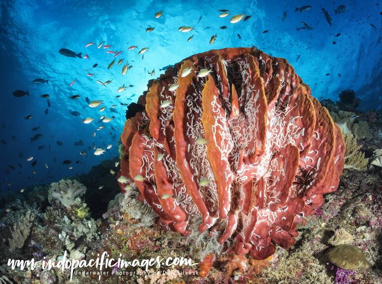 Barneys Reef_03_logo_750.jpg