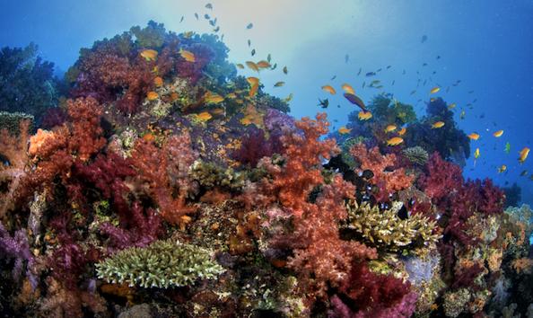 big_image_Dive_Soft_Corals_800x480.jpg