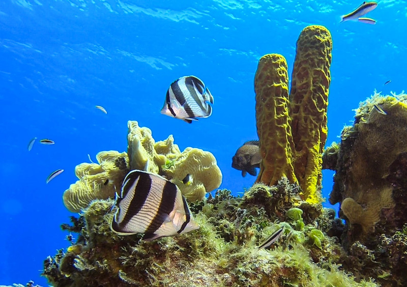 Cayman%20Brac%20Underwater%20%281%20of%201%29-2-XL.jpg