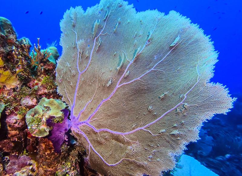 Cayman%20Brac%20Underwater%20%281%20of%201%29-3-L.jpg