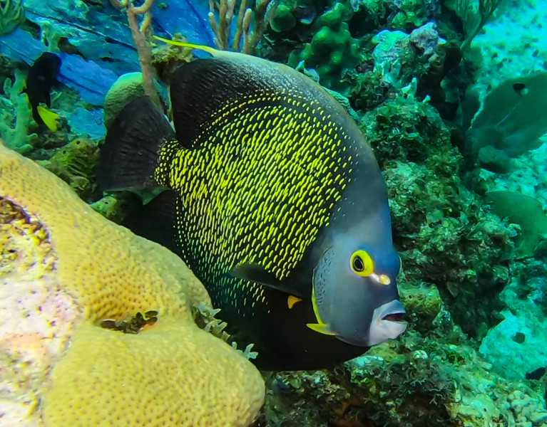 Cayman%20Brac%20Underwater%20%281%20of%202%29-L.jpg