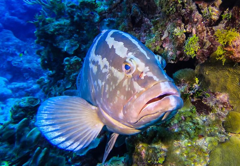 Cayman%20Brac%20Underwater%20%281%20of%203%29-4-L.jpg