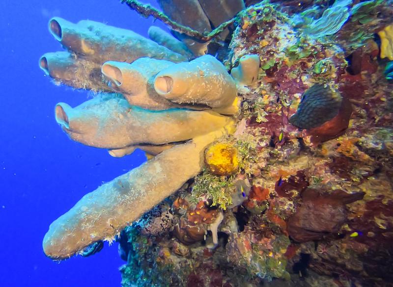 Cayman%20Brac%20Underwater%20%282%20of%202%29-2-L.jpg