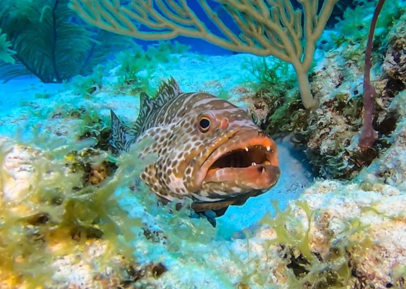 Cayman%20Brac%20Underwater%20%283%20of%203%29-L.jpg