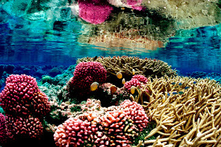 coral-reef-USFWS.jpg