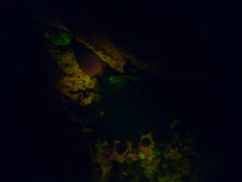 crevicecrab.jpg