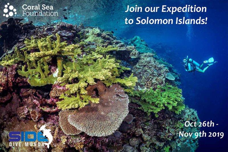 Dive Munda Trip promo - coral Sea Promo.jpg