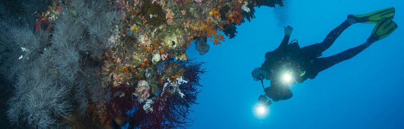 Divers_over_Undercut1-2.jpg