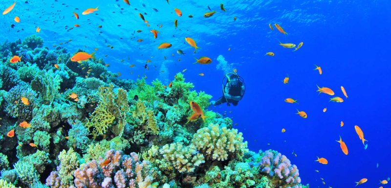 diving-in-anilao-batangas-philippines-first-timer2.jpg