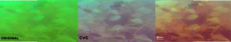 fish 3.png