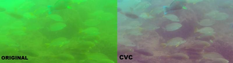 fish cvc.png