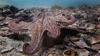 gloomy-octopus-2.jpg