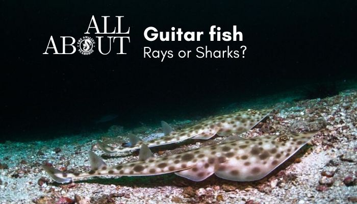 guitar-fish-facts_orig.jpg