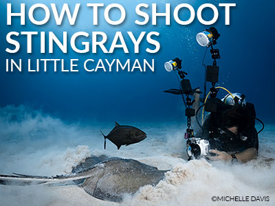 How-To-Shoot-Stinrays-Michelle-Davis-BANNER-SB.jpg