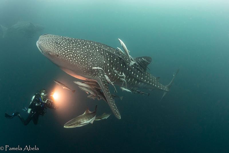 Jackand-WhaleShark2.jpg