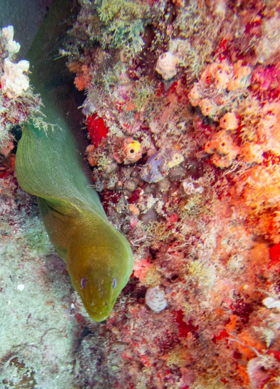 Moray eel in a world of color (1 of 1).jpg