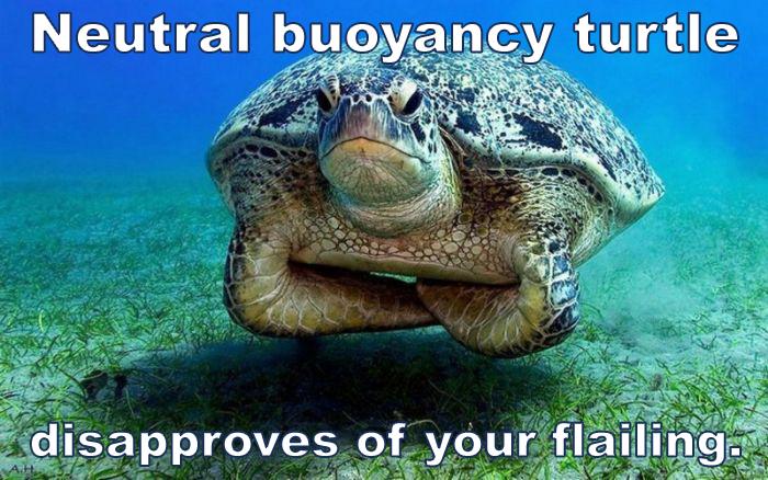 neutral buoyancy turtle trim scuba diving skills.jpg