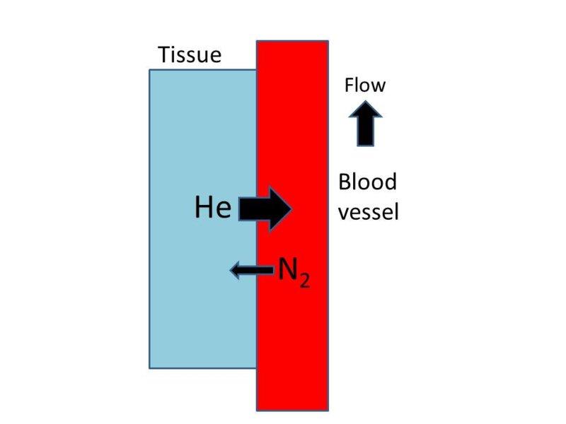 Normal tissue 2.jpg