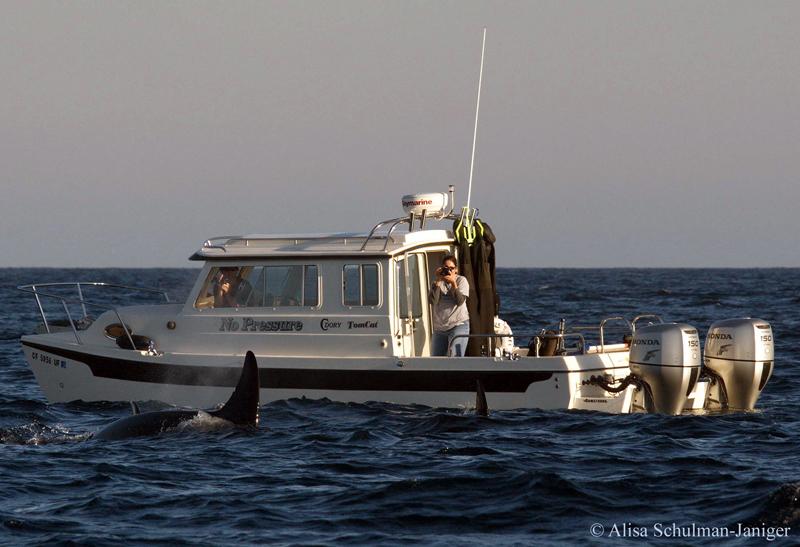 Orcas4_001.jpg