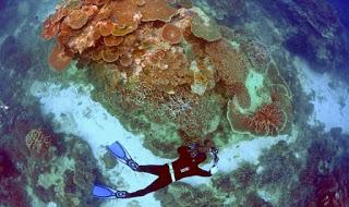 tourist-great-barrier-reef.jpg