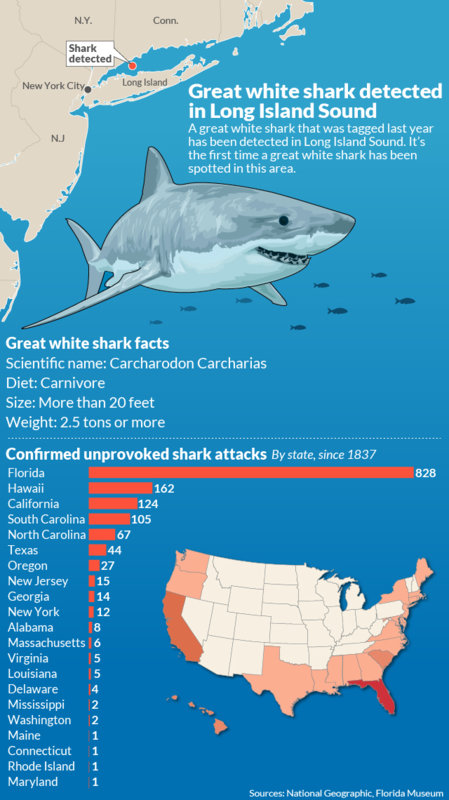 Unprovoked Shark Attacks since 1837.jpg