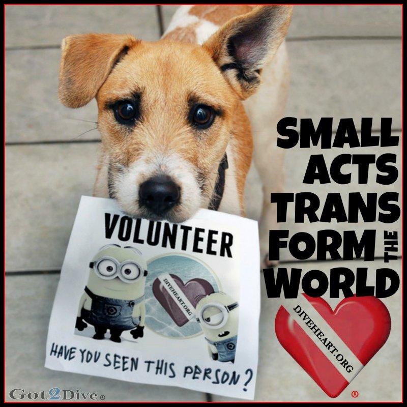 volunteer dog minion G2D DONE.jpg