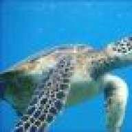 ft.lauderdale diver