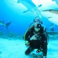 Tiburon Cebo