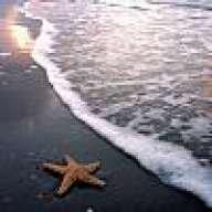 flstarfish44